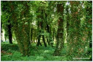 tajemniczy park, przed wojną był to teren należący do największego w ówczesnej Europie  uzdrowiska - ośrodka wczasowego