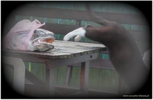 jak dorsz chciał zjeść kota :)