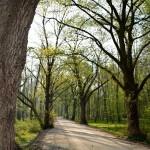 droga do Ryczyna